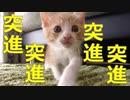 赤ちゃん猫が物凄い勢いで突進してきます。