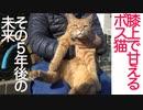 膝上で甘える系ボス猫、その5年後