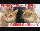 元武闘派ボス猫2匹、終の棲家で最強のふたりになる