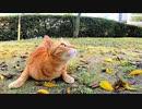 頭の上を飛んでいる虫が気になって仕方がない茶トラ猫