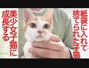 棄てられ子猫、美少女に成長して珍獣を狩る