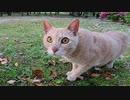 散歩中に小鳥を見つけて急に狩りモードになる野良猫
