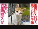 棄てられ子猫、猫コント集団を結成する