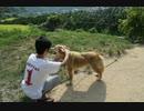 配信初登場から16年、永井先生の愛犬マサムネ、逝く。【追悼動画】