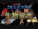 【ゆっくり解説】生物蛍光