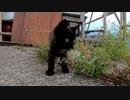 何を考えているか分からない黒子猫のクロ、覚醒なるか