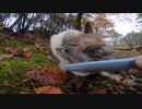 森で出会った野良猫にねこじゃすりを使ってナデナデしたら喜んでくれた
