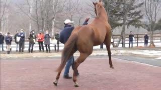 エイシンフラッシュと見る種牡馬展示会中に漏らしてしまったスマートファルコン