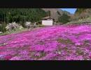 園田家の芝桜