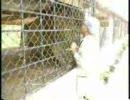 ムツゴロウ、ライオンに指を食われる