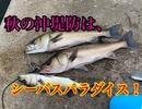 秋の沖堤防はシーバスパラダイス♪【もっち釣動組合#85】