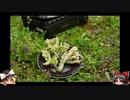 ゆっくりの田舎と自然 41話「山菜を採りに行くぞ」