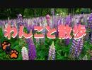 【わんこと散歩】初夏の散歩