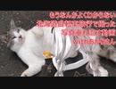 【VOICEROID非車載】もうなんかよくわからない北海道自転車旅行で撮った写真垂れ流す動画withあかりさん
