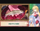 第8位:弦巻マキと水辺の出逢い #1「テンカラで狙う春ヤマメ」