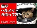 猫がヘルメットかぶってみた