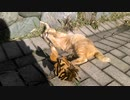 【アチョーニャー( ฅ•ω•)=͟͟͞͞⊃】木の葉と、たわむれる猫