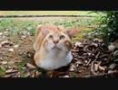 地面から生えてきたみたいな猫