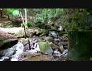 【まったり自然音】山の中の小川【睡眠・休憩・リラクゼーション・ホワイトノイズ】