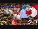 【ウイグル人権問題】強制された血と汗が染みついたウイグル綿花を使う日本企業ユニクロ