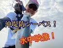 第2位:【20年10月】湾奥沖堤防シーバス!水中映像もあるよ♪【もっち釣動組合#86】