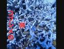 慶良間諸島・儀志布島(ギシップ)ダイビング