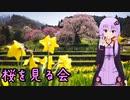 きんかつ!桜を見る会【V-STROM1050XT】