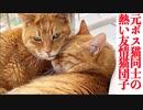 元ボス猫同士の友情猫団子