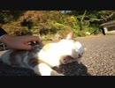 神社行くと日向ぼっこでマッタリしている猫様を見かけた