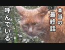 大雨の中、居なくなった子猫を探す野良猫の母【子猫と別れた母猫の様子 後編】