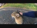 片目を失った地域猫発見!!この人懐っこい野良猫の運命はいかに?