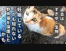 ホームズとの出会い~保護~妊娠疑惑【野良猫保護の記録】