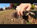 【cat cat】公園で地域猫達の猫会議に潜入!?