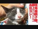 現場猫柄子猫、エリート子猫養成機関に入門する