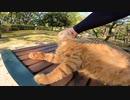 【cat cat】地域猫がテーブルの上でグルーミング、そこへ・・・!?【感動】