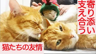寄り添い、支え合う病床の猫たち