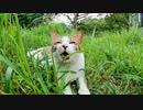 駐車場奥の草むらにいた野良猫がモフられに出てきた