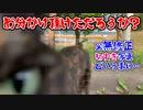 2021/06/14放送【73日目 北海道 空知郡中富良野町 あずにゃんぽ(猫散歩)】北海道全市町村制覇するまで帰れまてん! 猫と車中泊の旅 日本縦断【旅猫あずき~保護猫から旅猫へ~】