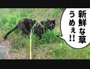 2021/06/15放送【74日目 北海道 空知郡中富良野町 あずにゃんぽ(猫散歩)】北海道全市町村制覇するまで帰れまてん! 猫と車中泊の旅 日本縦断【旅猫あずき~保護猫から旅猫へ~】