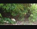 ドローン練習中に猫発見→追跡