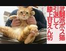 元武闘派ボス猫、引退して膝上で甘えん坊将軍になる