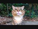 顔が横に長い猫が柵の向こうにいたので撫でようとするも手が届かず