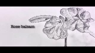 Rose balsam - yagi【初音ミク】