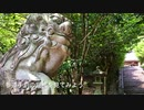 <天然記念物ツクバネガシの巨樹と紫陽花> 友田「速田(はやた)神社」R3 広島県廿日市市友田
