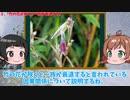 【ゆっくり解説】日本全国での竹の花の開花がヤバすぎる?村滅亡の言い伝えと大飢餓の歴史的因果関係を考察