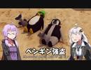 【voiceroid実況】ペンギンとは、こういうことさ【The Greatest Penguin Heist of All Time】