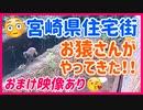 【24hライブ短編cut】宮崎県の住宅街にお猿さんがやって来た!!【おまけ映像アリ♪野良猫、タヌキ、イタチ】