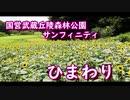 【森林公園お散歩】ひまわり サンフィニティ