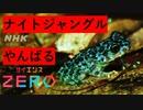 [サイエンスZERO]【独自潜入】やんばるナイトジャングル! | ...