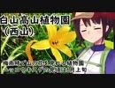 石川県 白山高山植物園(西山)【VOICEROID登山ガイド】